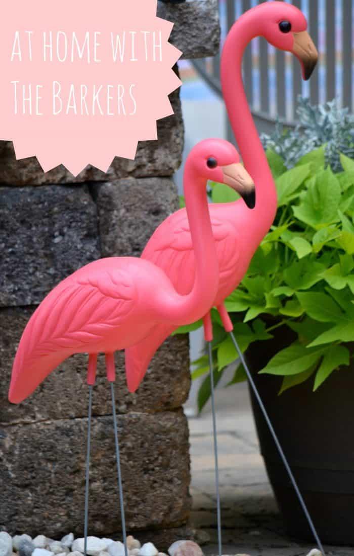 Dylan's Flamingos