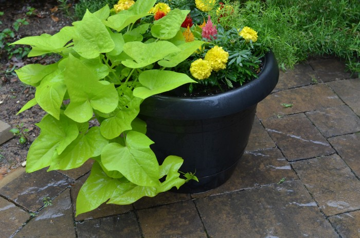 Painted flower pot with flowers