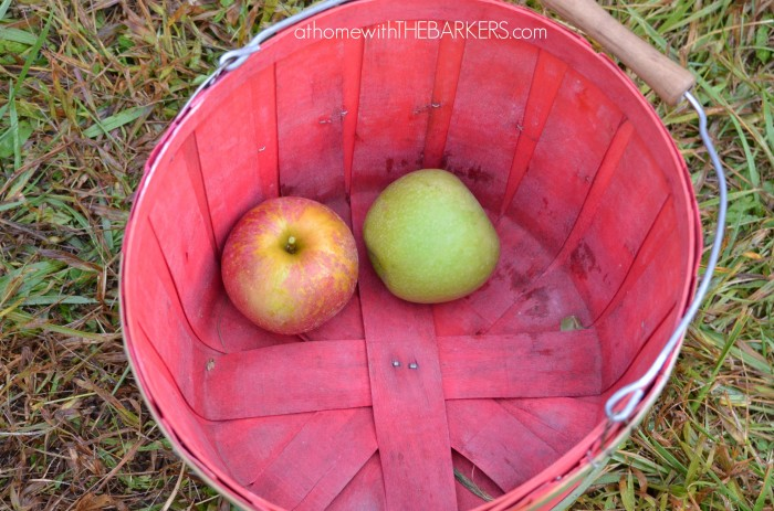 Sky Top Apple Basket