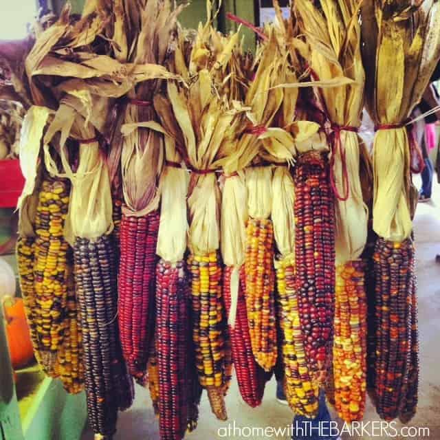 Sky Top Corn