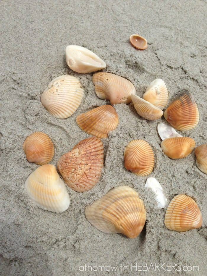 Sea Shell Angel Ornaments-shell collecting