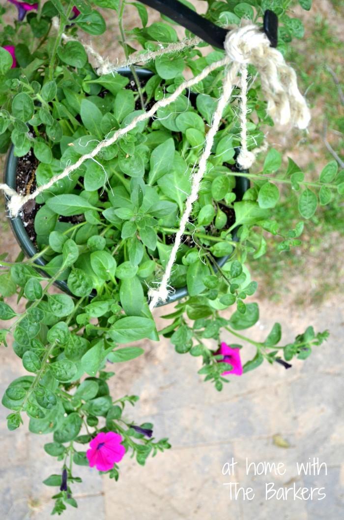 Hanging Basker Makeover-Wave Petunia