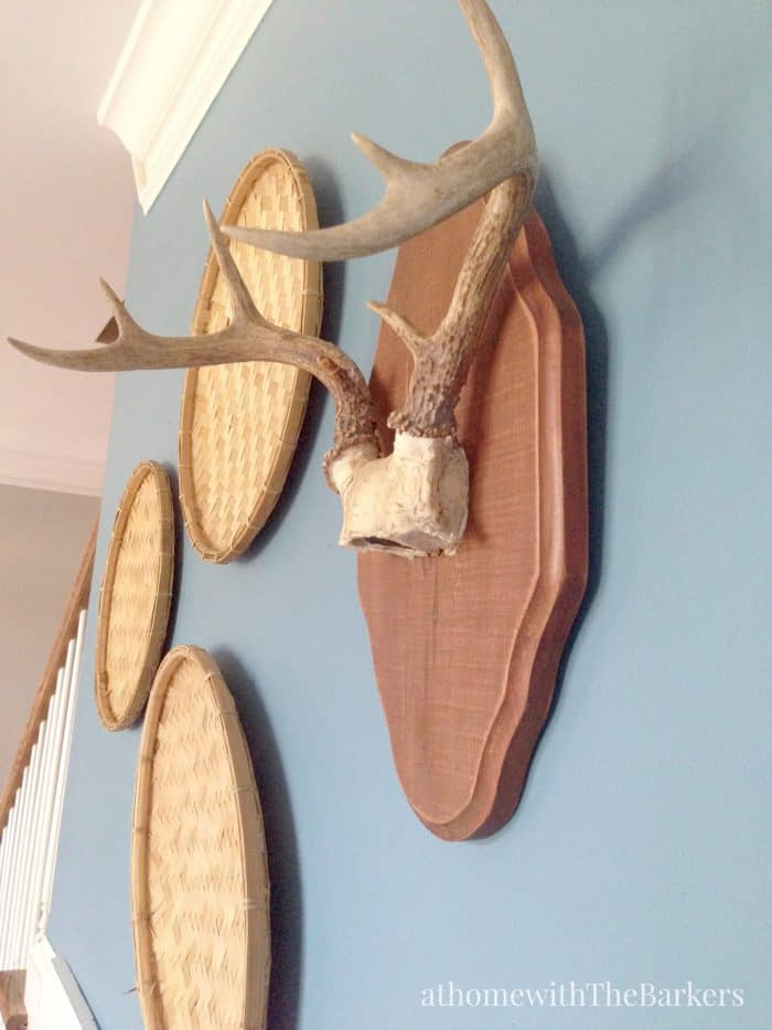 Mounted Antlers Dining Room Wall Display