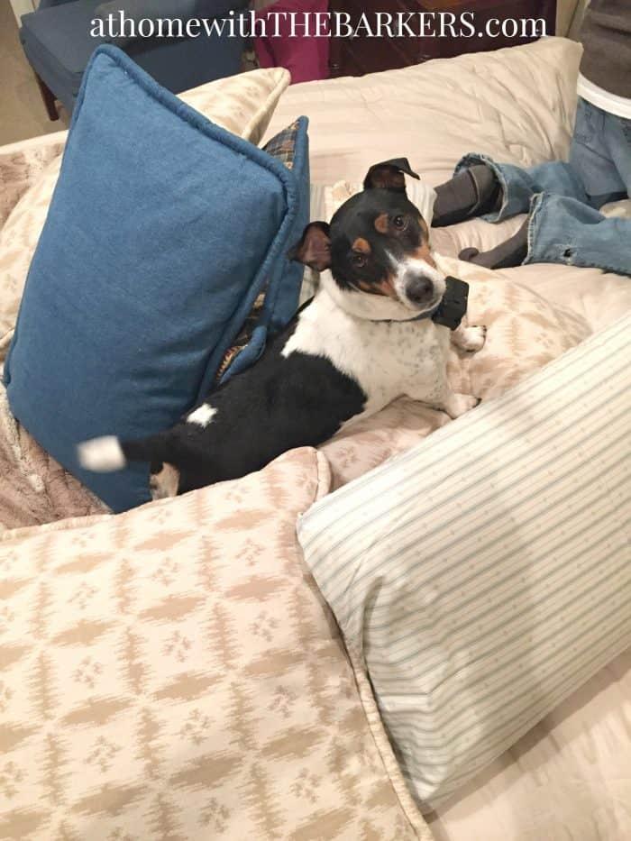 Choosing Bedding and Pillows