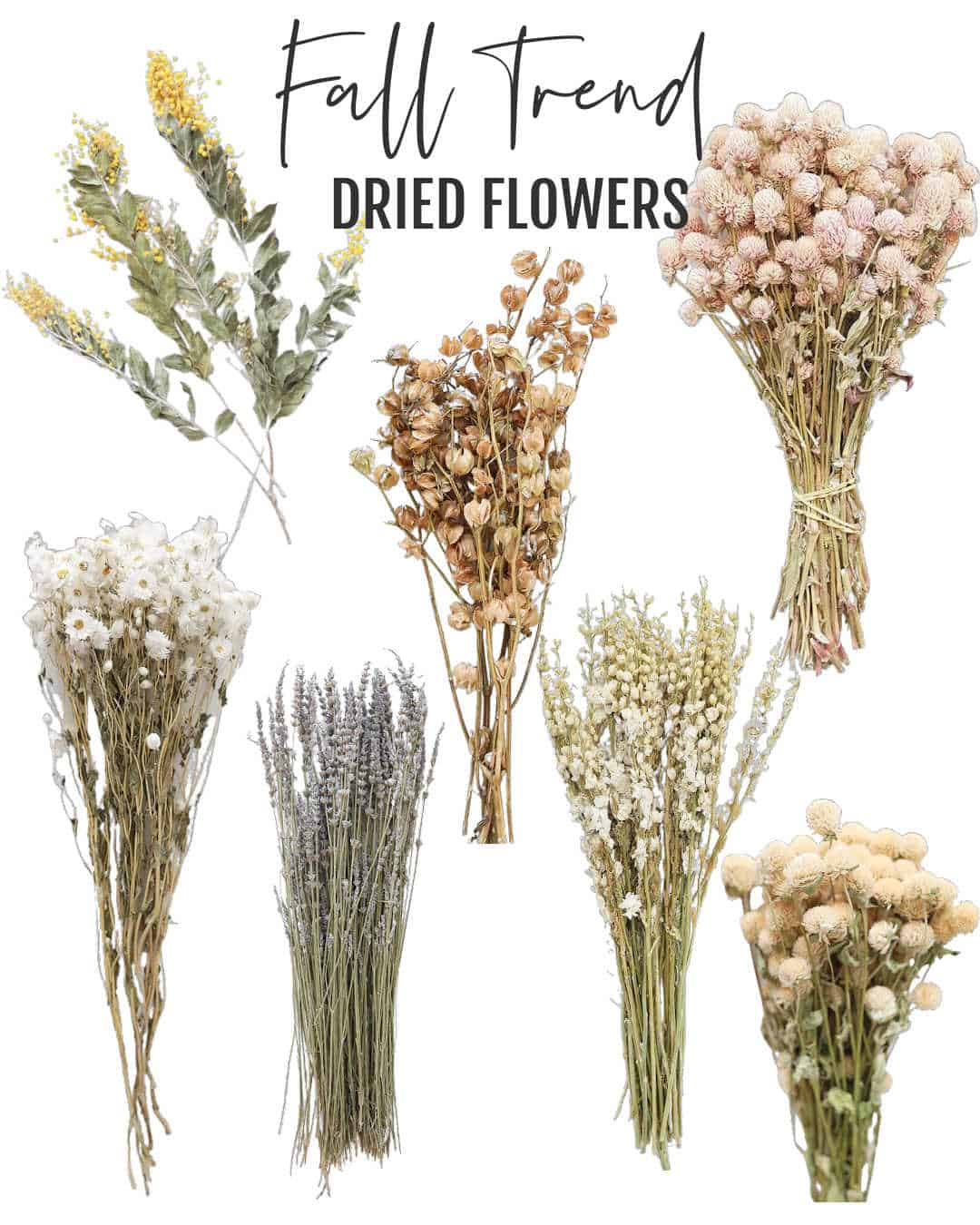 Dried Flower Fall Trend graphic